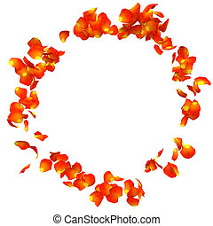 The orange rose petals are flying in a circle on isolated...