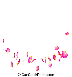 The red rose petals are flying in a circle on isolated white...