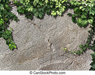 climbing plant on the old snone wall - climbing plant on the...
