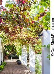 Vine covered verandah - Photo of a sunny vine covered...