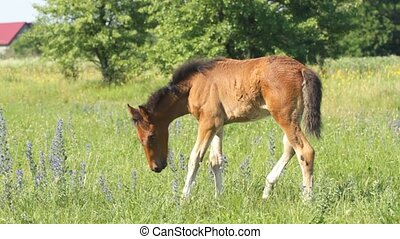 Baby horse pasture on a green grass