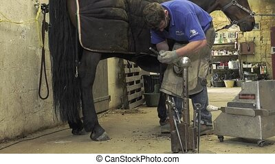 farrier replace horseshoes - the farrier cut the horse's...