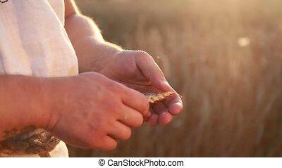 Male hands in wheat field