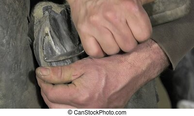 farrier replace horseshoes - the farrier removes the...