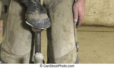 farrier replace horseshoes - the farrier finishes fixing the...