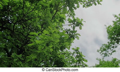 Leaves isolated on the sky and clouds background 3 axis stabilized medium shot