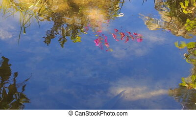 Camera Moves from Reflected Sky to Fish in Shady Place -...