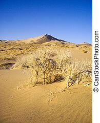 Sand dunes of the Mojave Desert - Mojave Desert landscape
