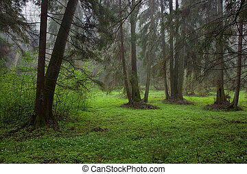 Riparian stand in springtime with fresh green bottom and...