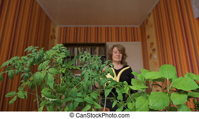 Happy mature female gardener watering sprouts at home