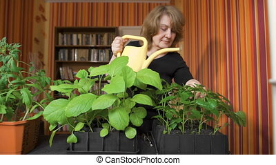 Happy mature female gardener watering sprouts at home....