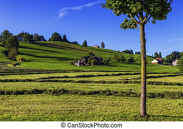 Appenzell landscape, Switzerland - Appenzell hill landscape...