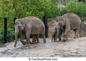Elephant family in the zoo - Photo of an elephant family in...