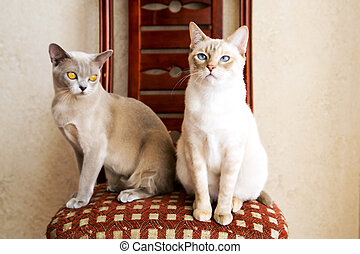 Two cat friends waiting for their owner - Grey and white cat...
