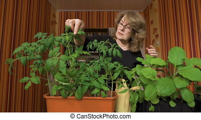 Woman nerd. Home greenhouse, new varieties of vegetable crops.