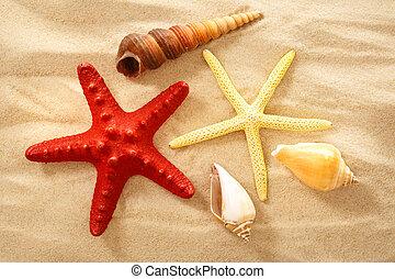 Fingerfish, seastar and seashells in sand closeup