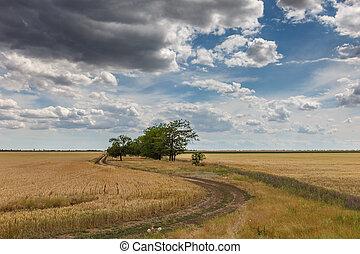 Among the vast fields of homeland