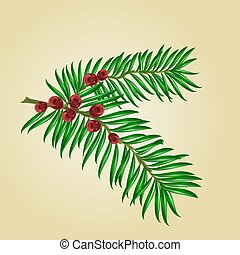 Yew branches with red berries vector.eps - Yew branches with...