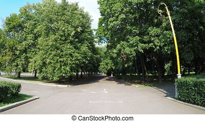 Alley in city park - In city park alley with trees on sides
