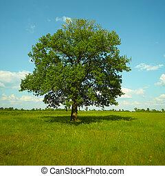 站立, 樹, 強有力, 橡木, 草地