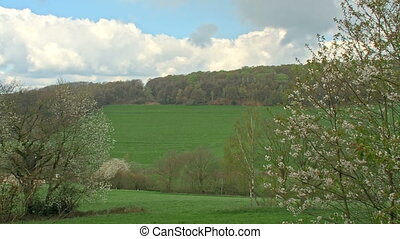Blooming trees in front of fields - The peaceful beauty of...