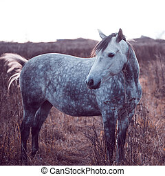 Beautiful gray horse in the field