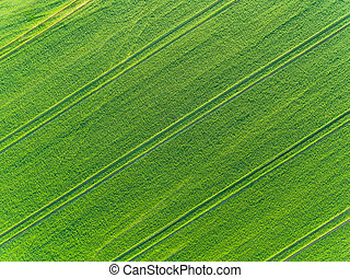 Green fields aerial view in spring