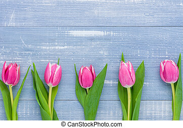 Pink Tulips on a blue background with copy space