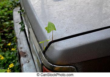 Empieza, planta, viejo,  eco, ecología, Destrozar, vida, su, coche, tronco,  grows
