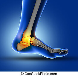 3D medical image of ankle bone - 3D render of a medical...