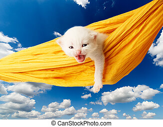 Cute white kitten in hammock isolated - White kitten in a...