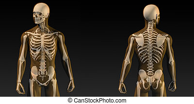 Human Anatomy with Visible Skeleton and Muscles Art