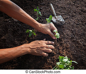 people planting young tree on dirt soil with gardening tool...