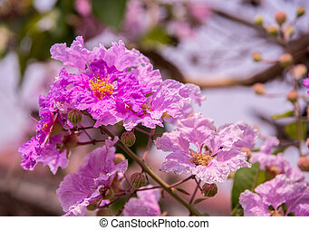 puple flowers blooming - Bouquet of puple flowers blooming...
