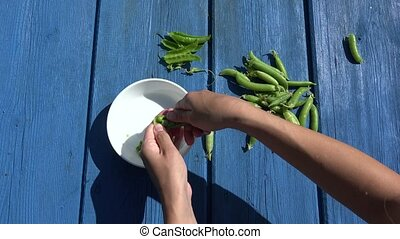 woman hands hulled peas white bowl blue wooden background 4K...