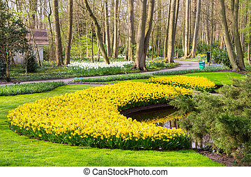 Flower bed with yellow daffodil flowers blooming in spring