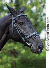 Bay horse stallion portrait in the summer against greenery