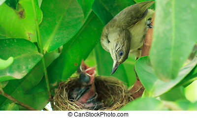 Birds on nest - The bird and young baby birds lives on nest