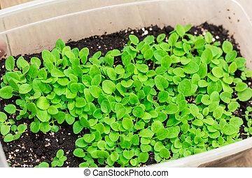 seedlings in a box