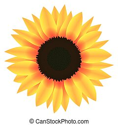 Illustration Vector Graphic Flower Sunflower