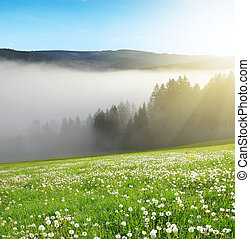 Morning haze in the National park Sumava, Czech Republic...