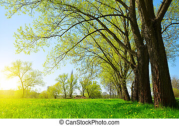 Trees on meadow in sunny day. Spring landscape.