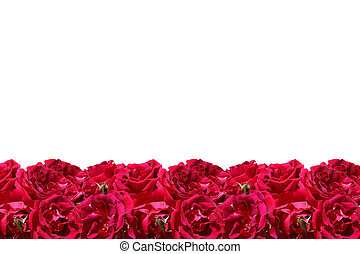 Red roses frame isolated on white background