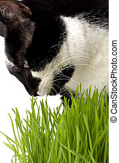 cat in grass isolated on white background