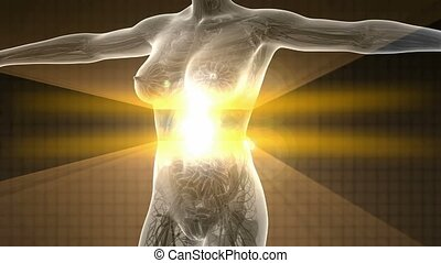 body in x-ray with glow digestive