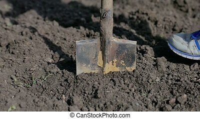 man farmer digs the ground old dirty shovel on the dry...
