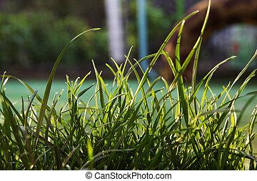 green grass background - a very green grass background