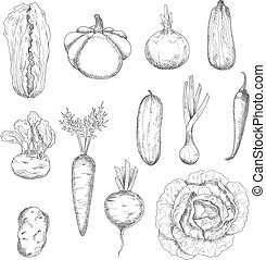 Freshly plucked healthy vegetables sketches - Freshly...