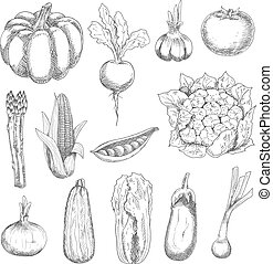 Healthful fresh vegetables engraving sketches - Healthful...