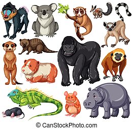 Different type of wildlife animals on white background...
